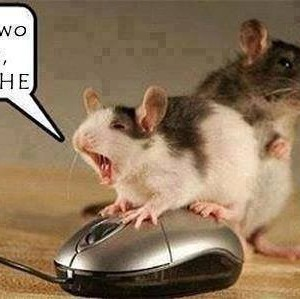 Mouse Activities