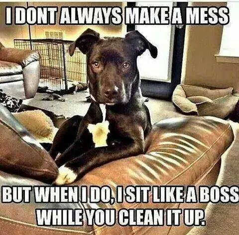 Image result for i don't always make a mess meme