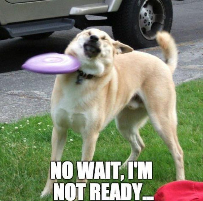 Not Ready Funny Pictures Quotes Memes Jokes