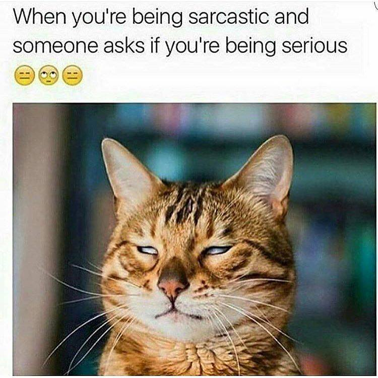 Funny sarcastic pictures tumblr