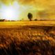 Field of Gold #2