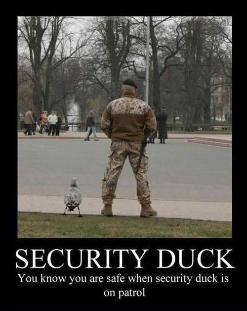 Security Duck | Funny Pictures, Quotes, Memes, Jokes