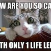 Cats have 9 lives