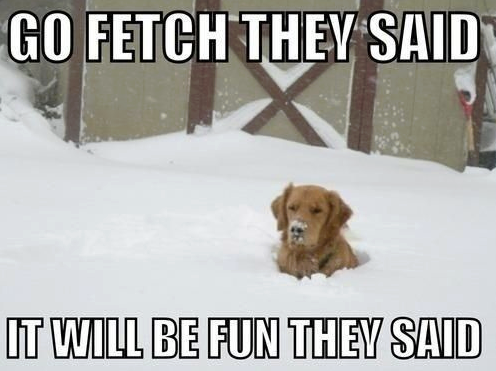 Go fetch they said | Funny Pictures, Quotes, Memes, Jokes