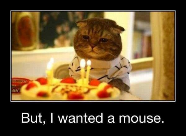 Cat's Birthday  Funny Pictures, Quotes, Memes, Jokes