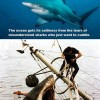 Shark Facts: Didyou know?