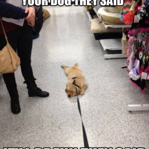 Shopping_with_your_dog_20140101_Shoppingwithyourdog.jpg