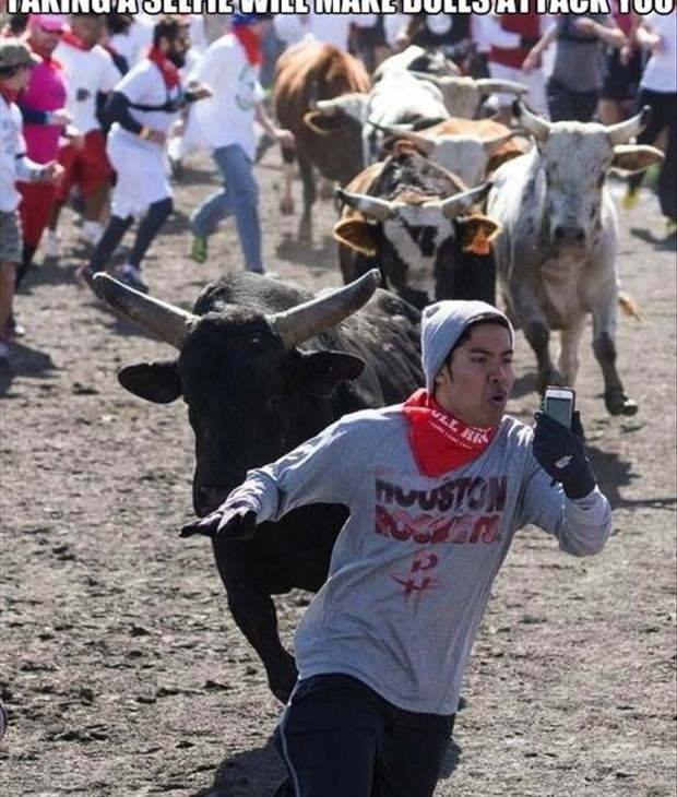 Bulls chasing you while taking a selfie