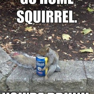 The_squirrel_knows_whats_up_20140213_Thesquirrelknowswhatsup.jpg