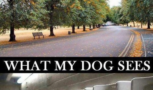 What me and My dog see