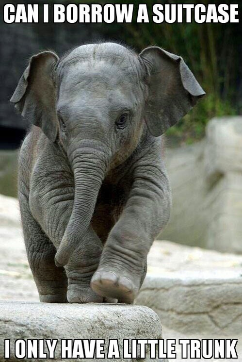 baby elephant meme funny pictures quotes memes jokes