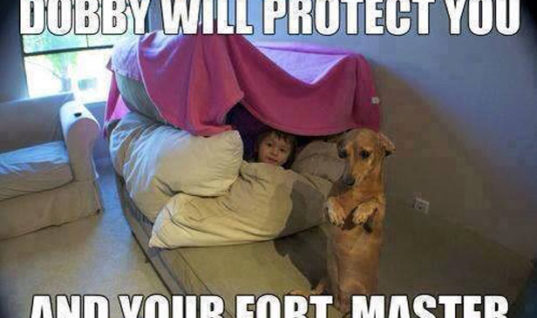 Fort Security guard