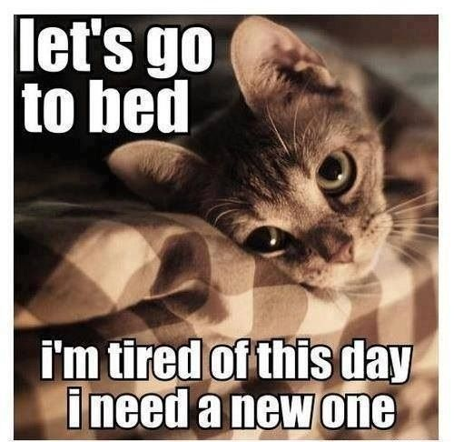 Funny lazy cat funny pictures quotes memes jokes for I need a new home