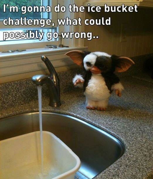Gizmo Ice Bucket Challenge Meme on Funny Gremlin Quotes