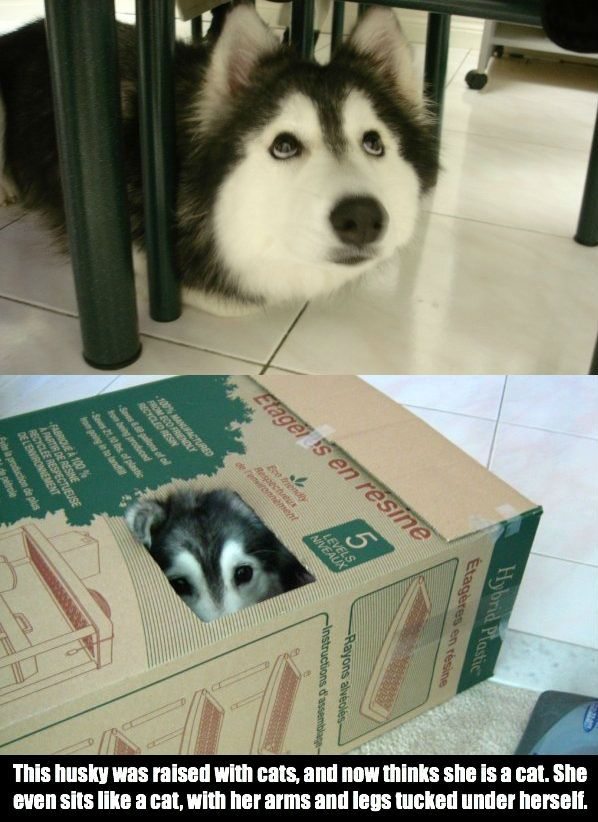 Dog Thinks He S A Cat