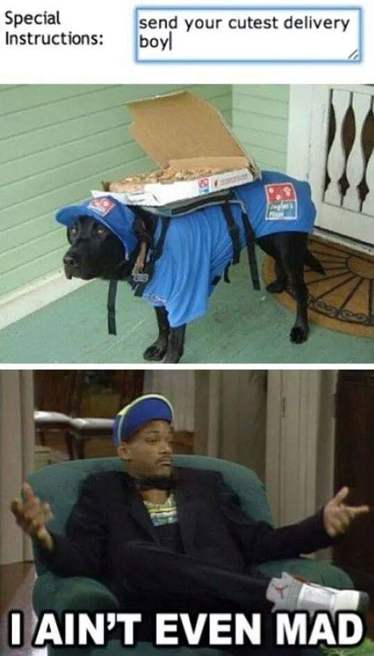 When dogs deliver pizza