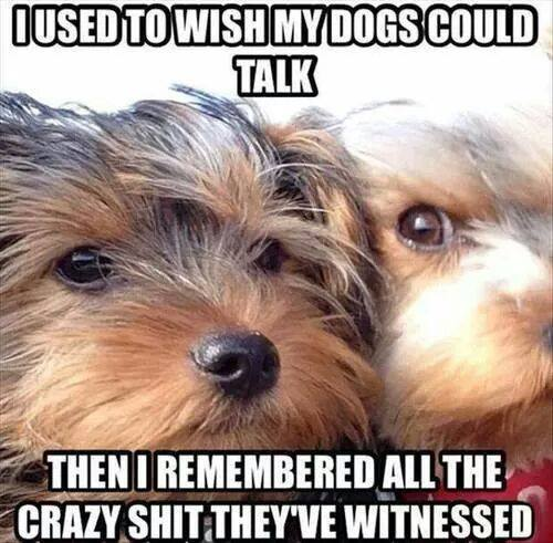 Wish My dogs could talk