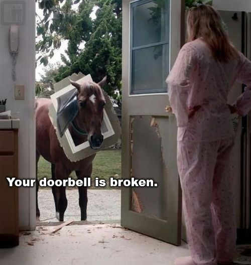 Bad Horse Meme | Funny Pictures, Quotes, Memes, Jokes