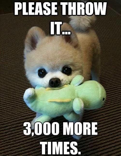 Cute Fat Puppy With Quotes. QuotesGram