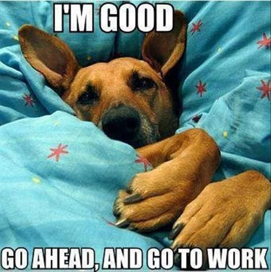 Sleeping Dog | Funny Pictures, Quotes, Memes, Jokes