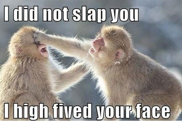 Monkey Jokes - Best, cool and funny jokes! App Ranking and Store ...