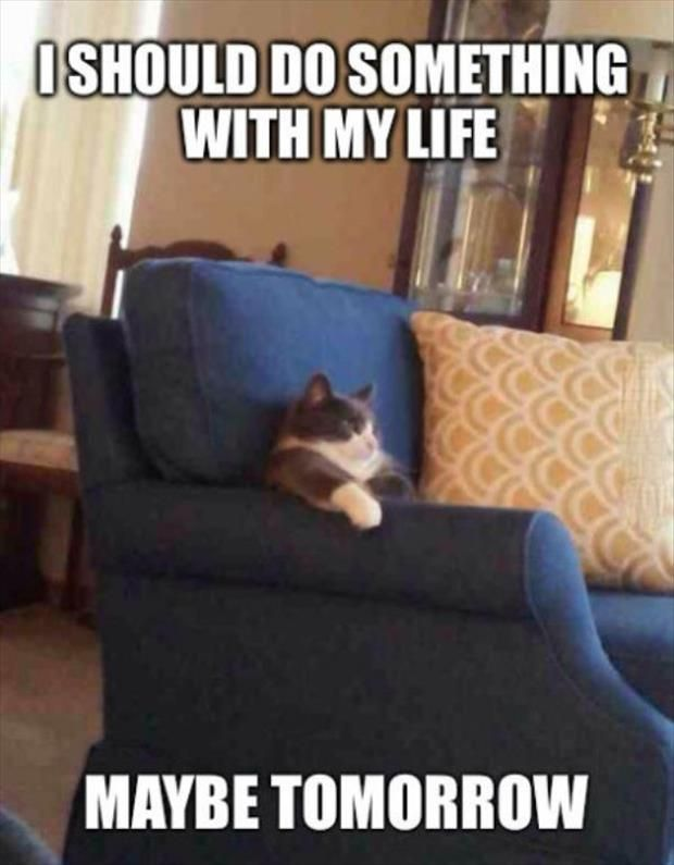 Funny Memes About Love Life : Lazy cat funny pictures quotes memes jokes