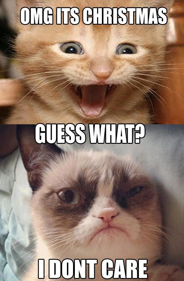 Grumpy Cat Quotes Funny Pictures Quotes Memes Jokes