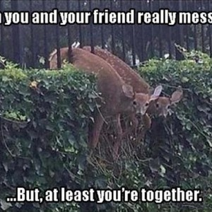 You And Your Friend