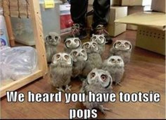 All Owls Want Sweets