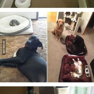 Cats Stealing Beds