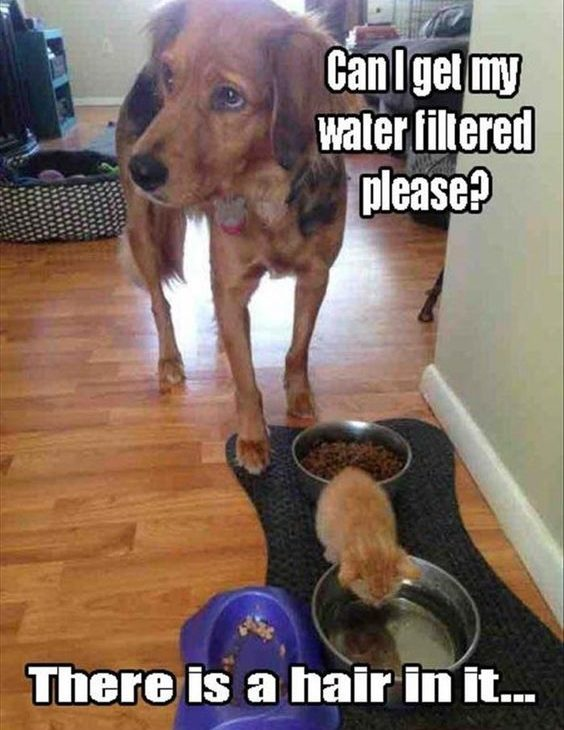Filtered Water Please