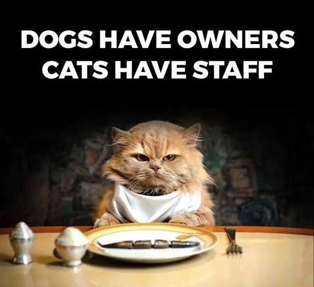 Dogs Vs Cats Busy