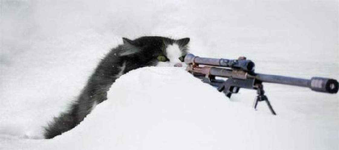 Sniper Cat | Funny Pictures, Quotes, Memes, Jokes