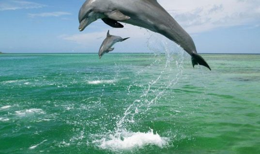 Things You Probably Knew about Dolphins