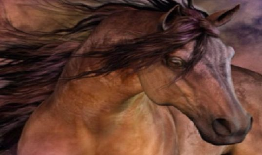 30 Things You Probably Didn't Know about Horses