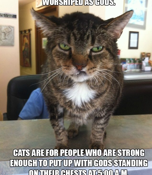 Cats Are For Strong People
