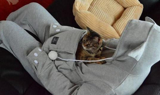 Hoodie Lets You Carry Your Cat in a Pouch