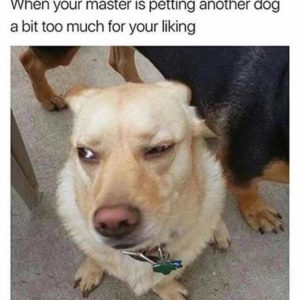 Petting Another Dog