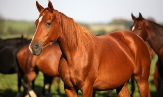 Three Facts to Know about Horses