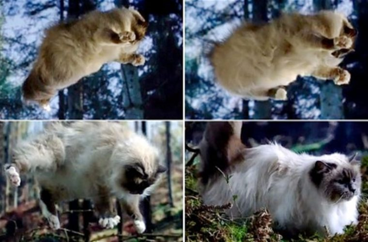 How Cats Survive Falls From Great Heights